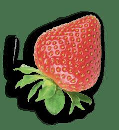 bio-fraise-indiv