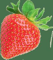 notre-mission-fraise