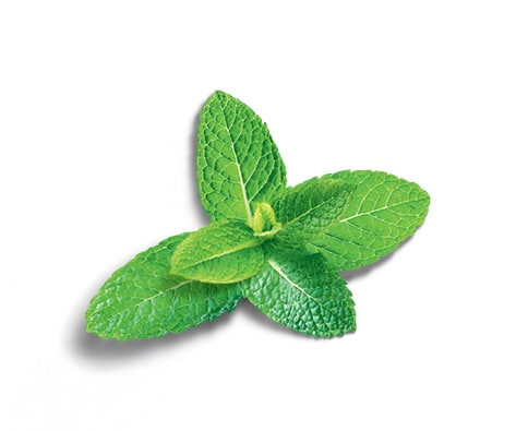 tracabilite-ingredients-menthe